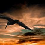 pelican-901004_1920