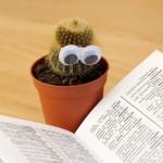 cactus-1059633_1920
